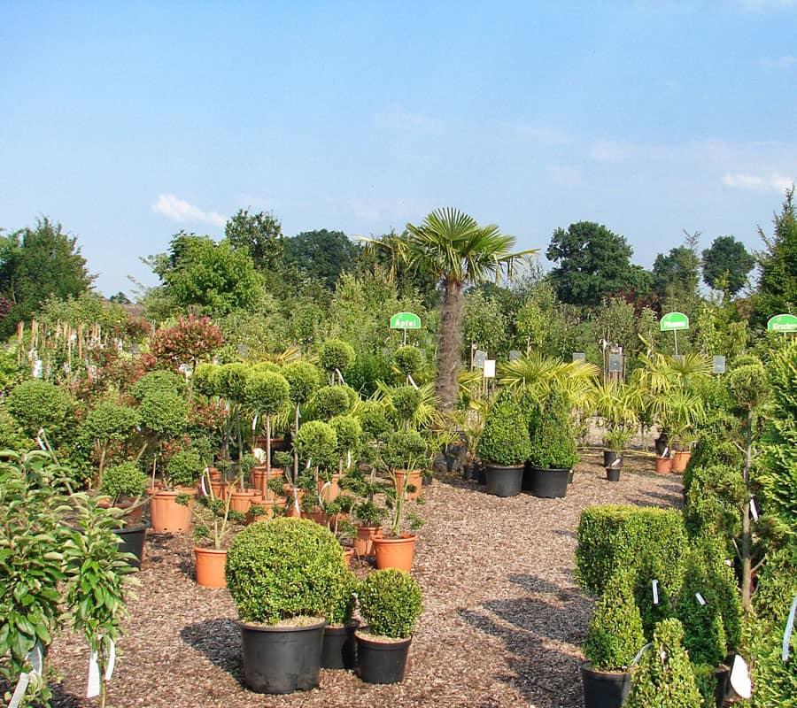 Leistungen pflanzencenter warnken for Pflanzen lieferservice