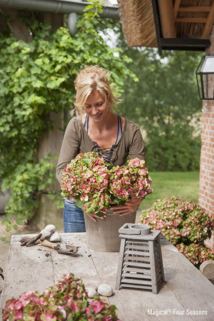 hortensien zu jeder jahreszeit eine augenweidepflanzencenter warnken. Black Bedroom Furniture Sets. Home Design Ideas