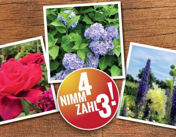 Nimm4,-zahl3-Titel