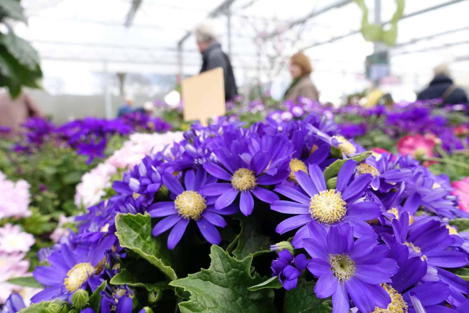 Bunte Frühlings- und Osterzeit im Pflanzencenter Warnken