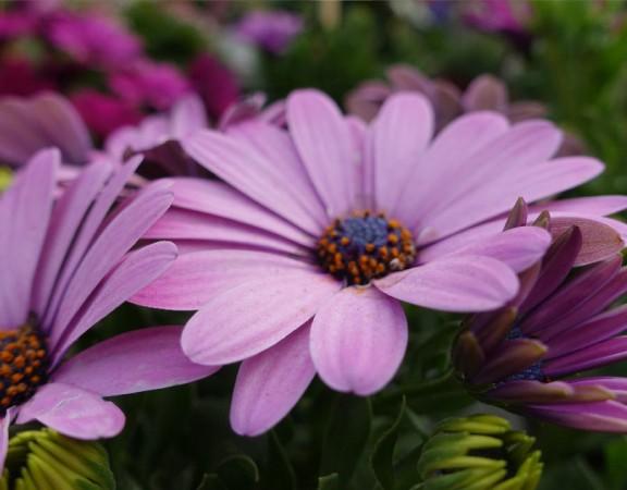 Sommerblumen-07