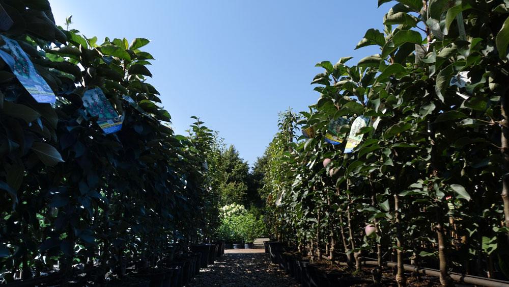 Pflanzen dort kaufen, wo sie wachsen