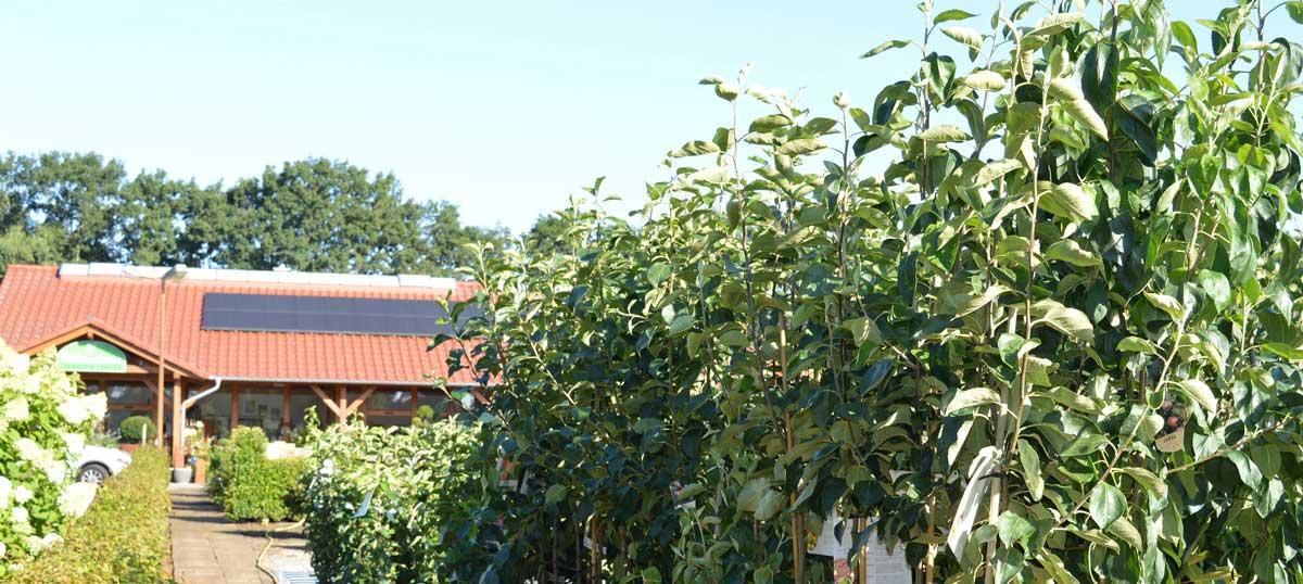 Entdecken Sie unsere neuen Apfelsorten